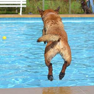 piscina per cane